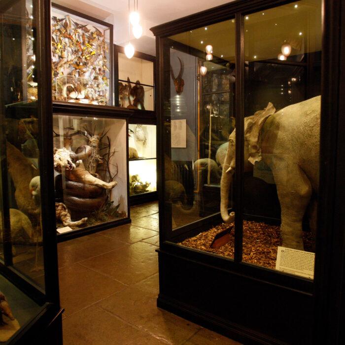 Rawtenstall Whittaker Museum